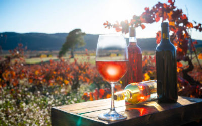 Learning about natural wines – 2h
